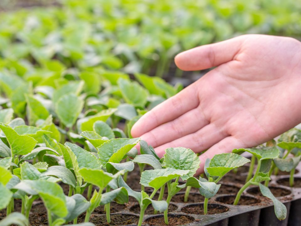 Close,Up,Farmers,Take,Care,Of,Vegetable,Hydroponic,Organic,Planting.